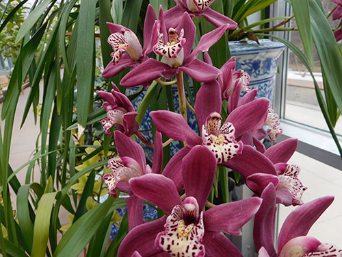 Orchid Exhibit at Denver Botanical Gardens